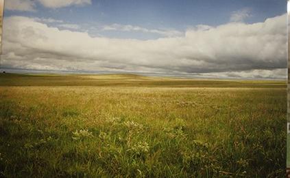 Ron pasture